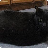 Adopt A Pet :: Sophia - Witter, AR