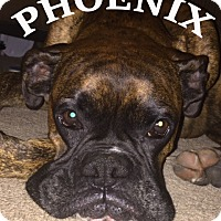 Adopt A Pet :: Pheonix - Wilmington, NC