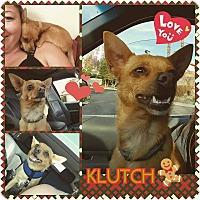 Adopt A Pet :: Klutch - Santa Rosa, CA