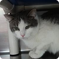 Adopt A Pet :: Pia - Elyria, OH