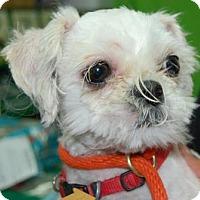 Adopt A Pet :: Tweety - Brooklyn, NY