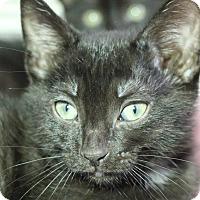 Adopt A Pet :: TJ - Sarasota, FL