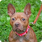 Adopt A Pet :: Rosie !