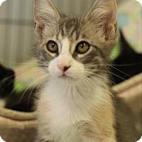 Adopt A Pet :: Peaches - Baton Rouge, LA