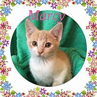 Adopt A Pet :: Marcy - Covington, KY