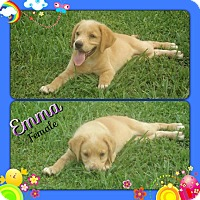 Adopt A Pet :: Emma adoption pending - Manchester, CT