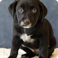 Adopt A Pet :: Darren - Waldorf, MD