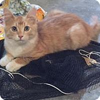 Adopt A Pet :: Mac - Rochester, MN