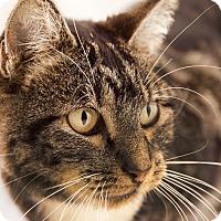 Adopt A Pet :: Plum - Chaska, MN