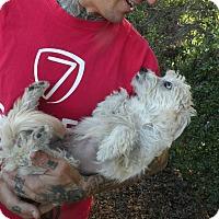 Adopt A Pet :: Paloma - El Cajon, CA
