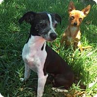 Adopt A Pet :: Penni & Scrappy(Bonded Pair) - Sarasota, FL
