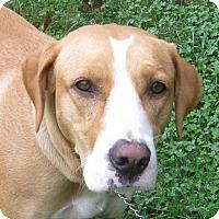 Adopt A Pet :: Misty - Hillsboro, OH