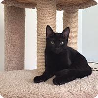 Adopt A Pet :: L U N A - Brea, CA