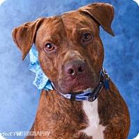 Adopt A Pet :: wes - Miami, FL