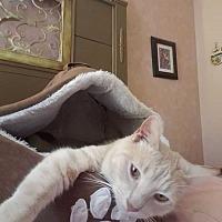 Adopt A Pet :: Gilligan - Cumberland and Baltimore, MD