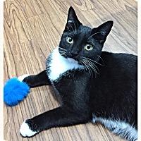 Adopt A Pet :: Brogan - St. Charles, IL
