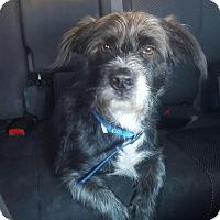 Adopt A Pet :: Kaiser - Sagaponack, NY