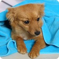 Adopt A Pet :: Mae - Kerrville, TX