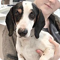 Adopt A Pet :: Sinclair - Weston, FL