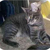 Adopt A Pet :: Charcoal - Davis, CA