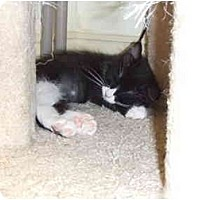 Adopt A Pet :: Cornelia Marie - Lake Charles, LA