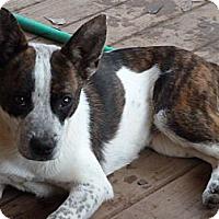 Adopt A Pet :: Mila - E Windsor, CT