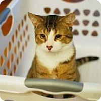Adopt A Pet :: Tigger - Alexandria, VA