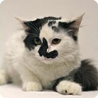 Adopt A Pet :: Paula - Sacramento, CA