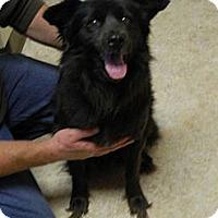 Adopt A Pet :: Tiara - Troy, OH