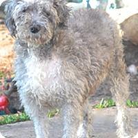 Adopt A Pet :: Prudence - adoption pending - Norwalk, CT