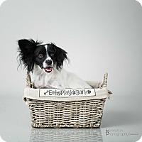 Adopt A Pet :: George - Burbank, CA