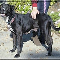 Adopt A Pet :: Onyx needs family - Sacramento, CA