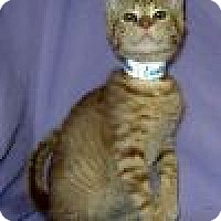 Adopt A Pet :: Ludlow - Powell, OH