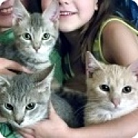 Adopt A Pet :: Hickory, Dickory & Dock - Germantown, MD