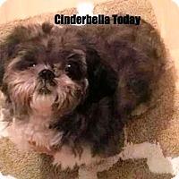 Adopt A Pet :: Cinderbella - Jacksonville, FL