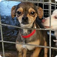 Adopt A Pet :: CUTIE - Gustine, CA