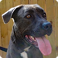 Adopt A Pet :: George - Spring Hill, FL