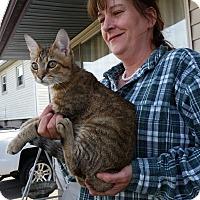 Adopt A Pet :: Kayos - Fairborn, OH