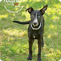 Adopt A Pet :: Fiona - Pearland, TX
