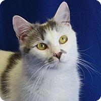 Adopt A Pet :: Archie - Winston-Salem, NC