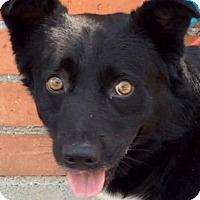 Adopt A Pet :: BRICE (video) - Los Angeles, CA