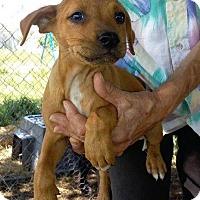 Adopt A Pet :: Doug - Aurora, CO