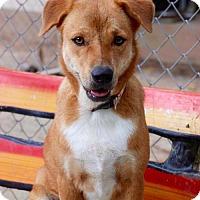 Adopt A Pet :: 'RUBY' - Agoura Hills, CA