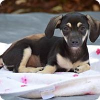 Adopt A Pet :: Cricket - Sacramento, CA