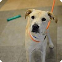 Adopt A Pet :: Larry - Chattanooga, TN