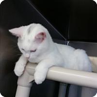 Adopt A Pet :: Carlos - Chippewa Falls, WI