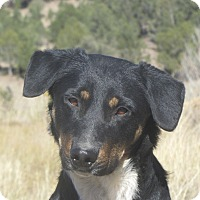 Adopt A Pet :: Frankie - Ridgway, CO