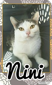 Domestic Shorthair Cat for adoption in Edwards AFB, California - Nini