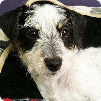 Adopt A Pet :: KitKat - Thousand Oaks, CA