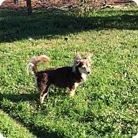 Adopt A Pet :: Mistletoe - Sacramento, CA